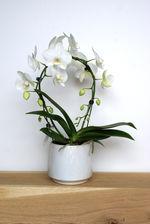 Orchidee/wit/cirkel