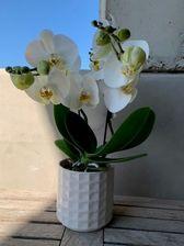 Tablo orchidee NIEUW