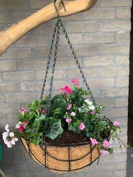 Hangingbasket lentebloeiers