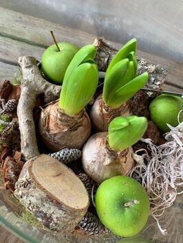 Hyacinten in glas