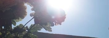 Millefiori - Tangerine Garden