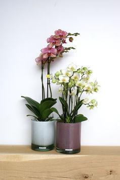 Orchidee met bijpassende Henry Dean