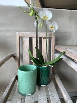Orchidee/wit/standaard