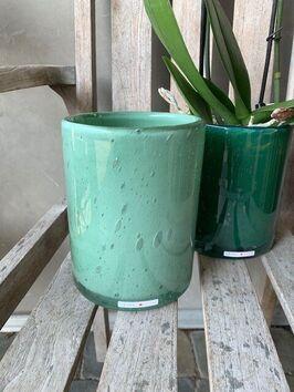 Orchidee/wit/standaard