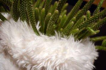 Rhipsalis in een winters jasje