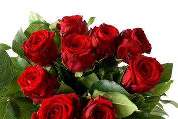 Rode rozen in 't groen