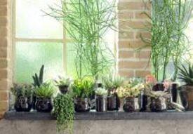 Assortiment groene kamerplanten