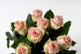 Roze rozen in 't groen