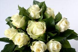 Witte rozen in ' t groen